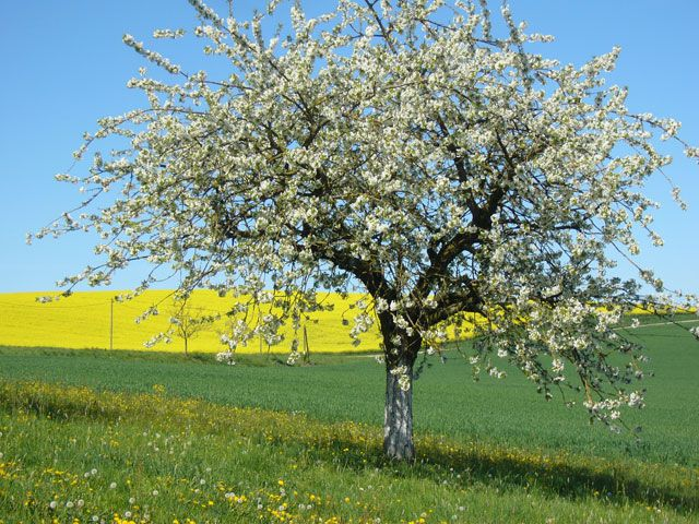 Frühling in Bad Griesbach