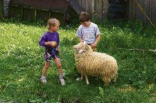 Kinder mit einem Schaf