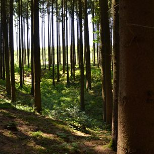 Wald in Bad Griesbach